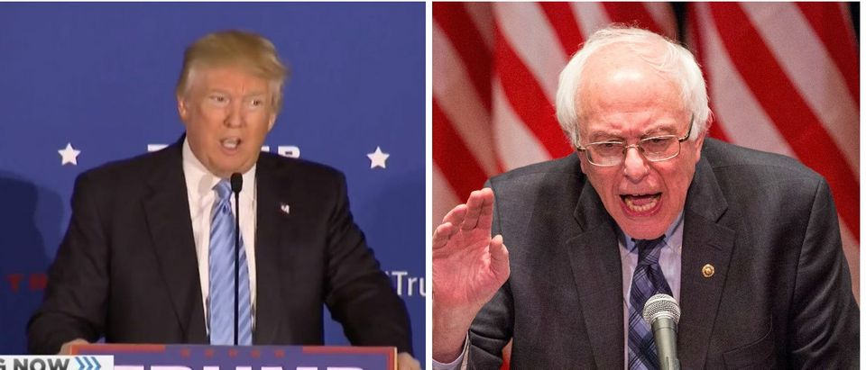Trump I Want To Run Against The 'Little Puppy' Bernie Sanders [screen shot MSNBC Getty]