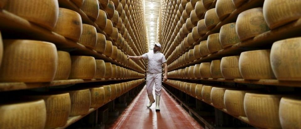 Worker inspects wheel of Parmesan cheese at storehouse shelf 4 Madonne Caseificio dell'Emilia dairy cooperative in Modena