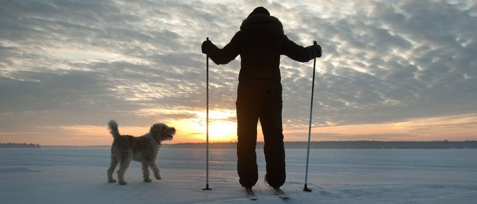 A cross country skier watches as the sun rises with a dog, on a snow covered lake in the Kawartha Lakes region of Ontario