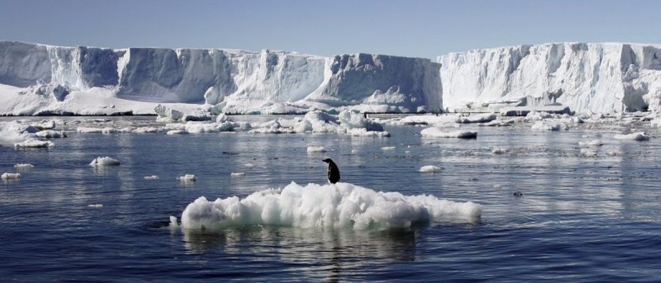 File photo shows an Adelie penguin standing atop a block of melting ice near the French station at Dumont dÃUrville in East Antarctica