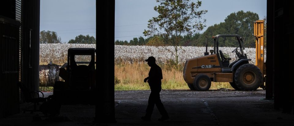 A field of unharvested cotton sits outside (REUTERS/Brian Snyder)