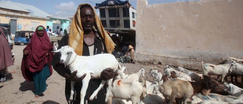 Trader carries his goat to a livestock market ahead of the Eid al-Adha festival in Somalia's capital Mogadishu