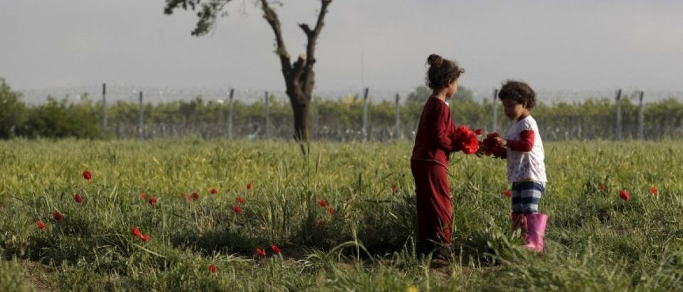 Two children gather poppies at a field next to a makeshift camp for migrants and refugees at the Greek-Macedonian border near the village of Idomeni