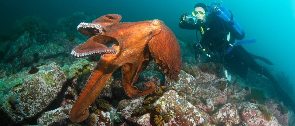 Climate Scientist Dubious About Global Warming Octopus Study