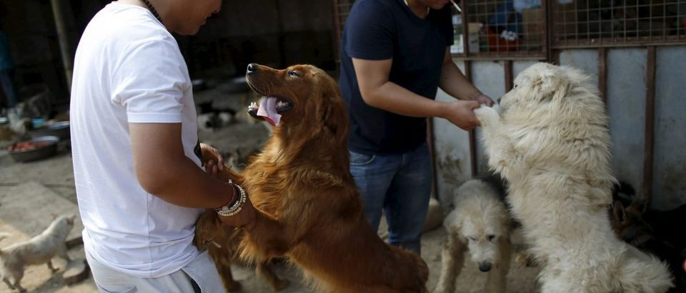 Visitors play with rescued dogs at a shelter ran by Yang Xiaoyun in Tianjin