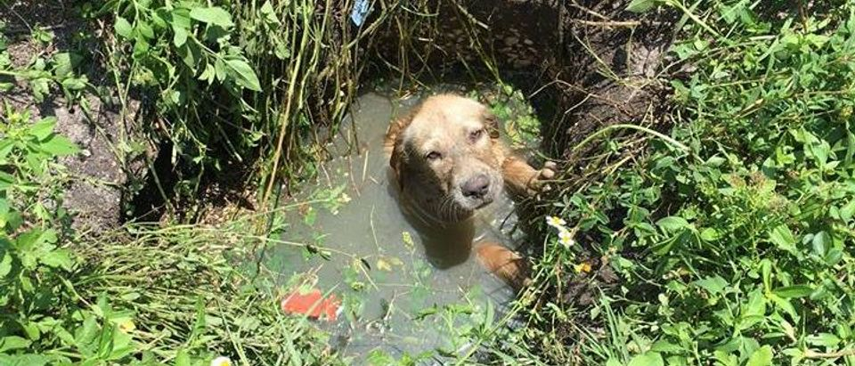 Puddles (St. Lucie County Sheriff's Office)