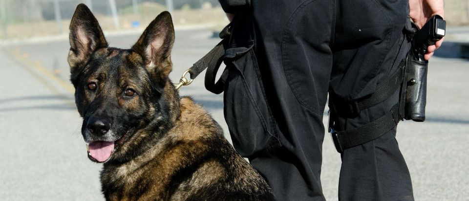 A K9 officer with his partner during their patrol shift. (John Roman Images/Shutterstock)