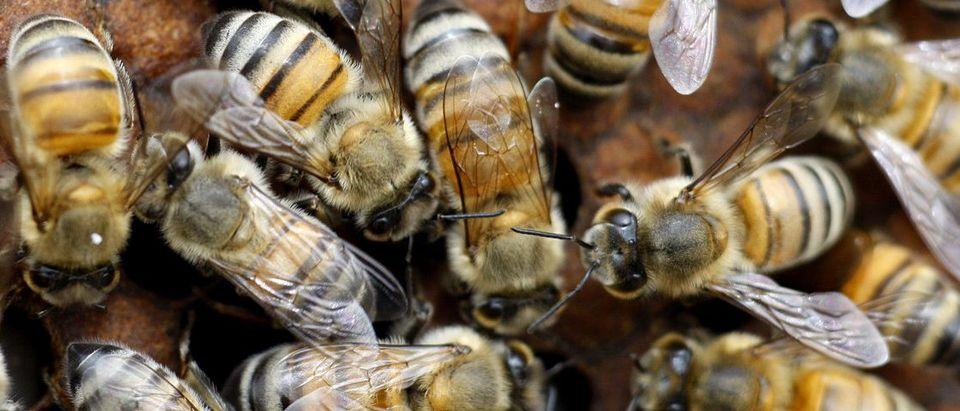 Honey bees swarm on a hive in Al Taryyaq farm in Jordan Valley