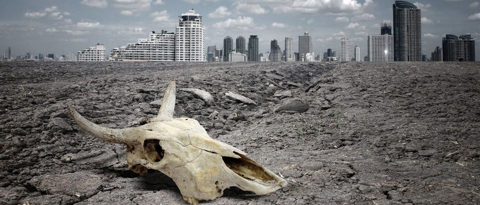 Skull of an animal on dry land in front of city. (Shutterstock/SCOTTCHAN)