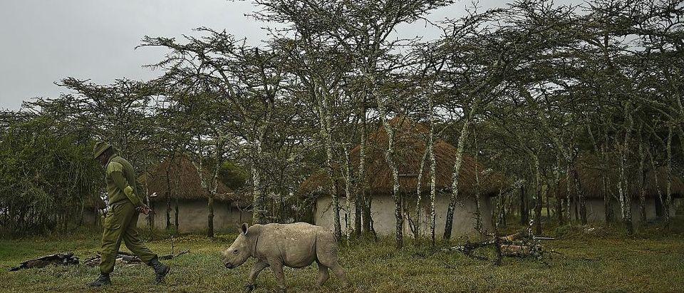 KENYA-CONSERVATION-POACHING