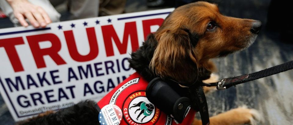 A service dog is seen wearing a pin in support of Republican U.S. presidential candidate Donald Trump during the California Republican Convention in Burlingame, California, April 29, 2016