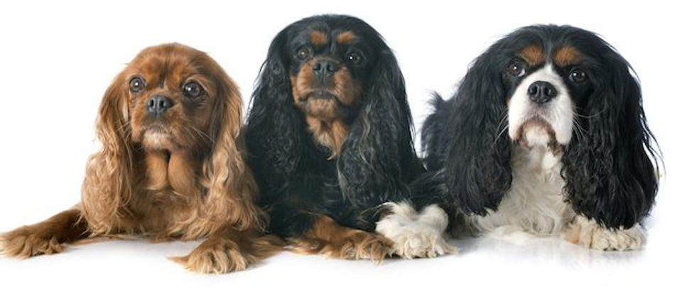 female dogs