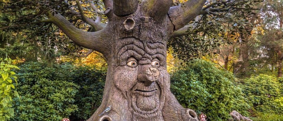 Tree face. Photo: Shutterstock