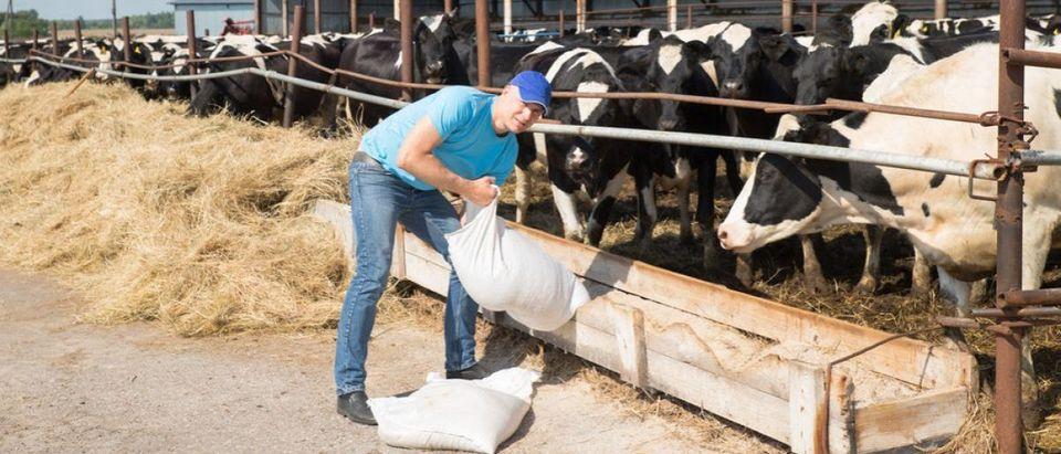 Dairy Production High Despite Low Milk Prices