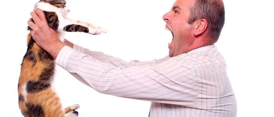 Man screams at cat (Credit: Kletr/Shutterstock)