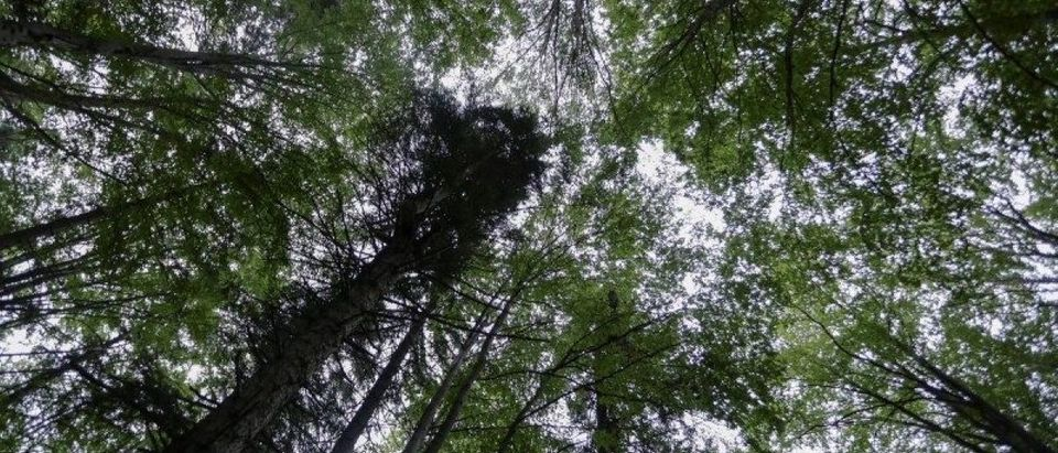 Trees inside one of the patches of virgin forests