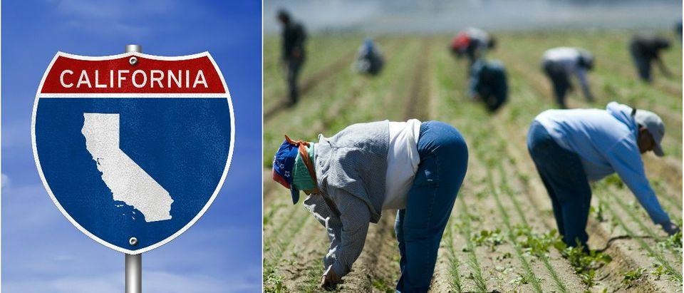 California Sign: Gguy/shutterstock.com, Farm Workers: Richard Thornton/shutterstock.com
