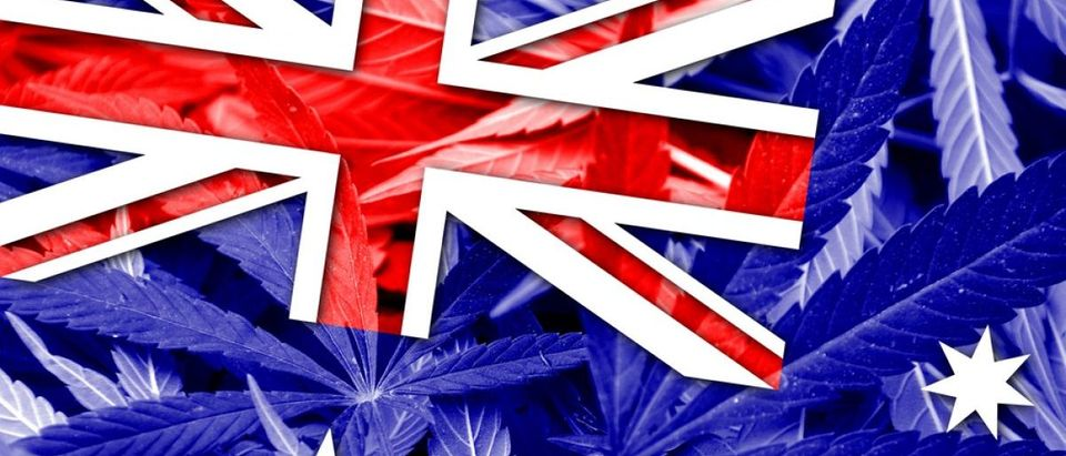 The Australian flag is shown on a backdrop of pot leaves. Shutterstock/Lukasz Stefanski