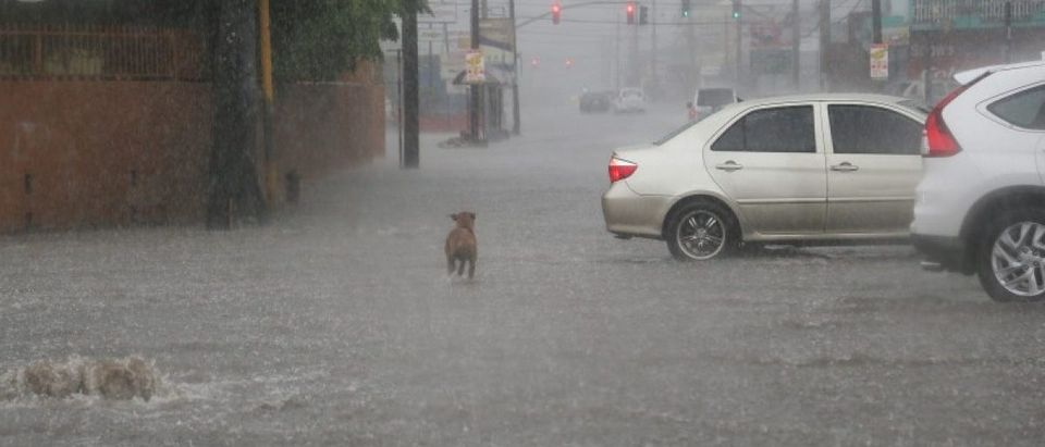 Dog crosses a road as heavy rains caused by the outer rain bands of Hurricane Matthew move into Kingston