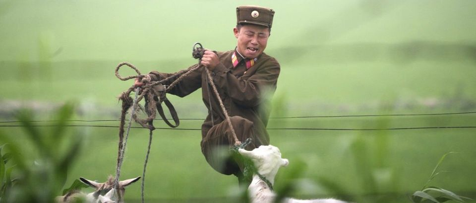 A North Korean soldier kicks a goat on the banks of the Yalu River near the North Korean town of Sinuiju