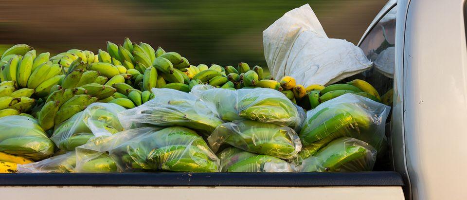 Truck carries bananas (Photo: GUNDAM_Ai/Shutterstock