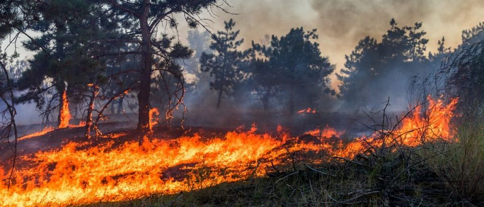 Forest fire. Burned trees after wildfire, pollution and a lot of smoke. Credit: yelantsevv/ Shutterstock