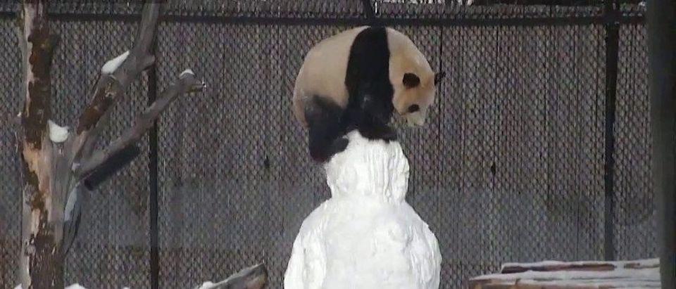 panda_snowman