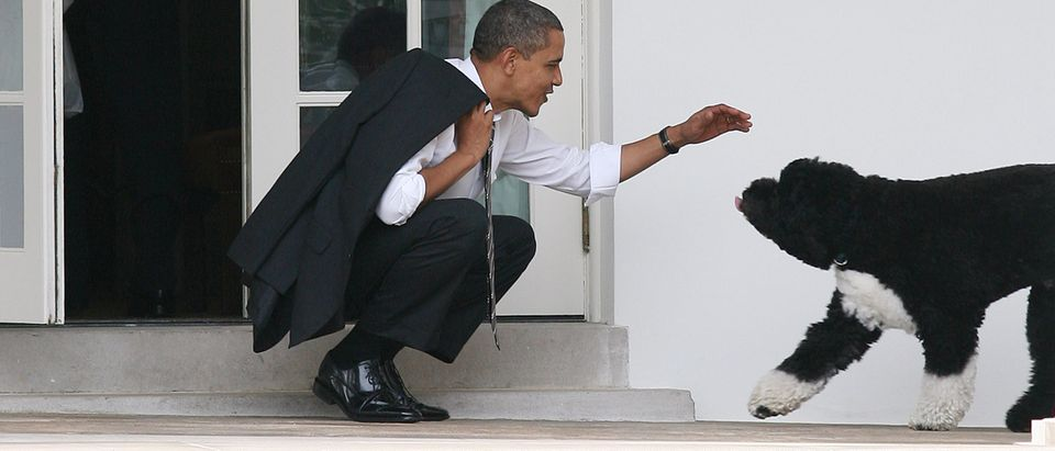 President Barack Obama greets his dog Bo outside the Oval Office of the White House March 15, 2012 in Washington, D.C. (Photo by Martin H. Simon-Pool/Getty Images)