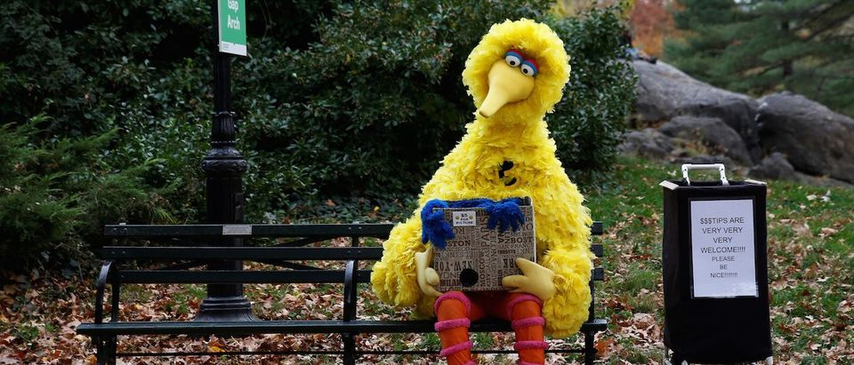 A man dressed as the Sesame Street character Big Bird sits on a bench waiting to take pictures with people walking through Central Park in New York