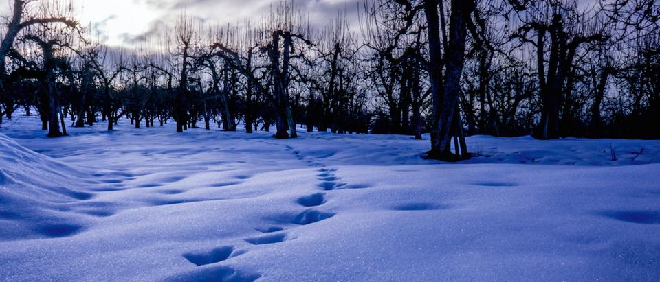 Snow Heartprints with each step (Shutterstock/Yobel Muchang)