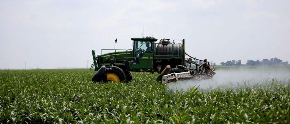 FILE PHOTO: A worker uses a tractor to spray a field of crops during a crop-eating armyworm invasion at a farm near Settlers