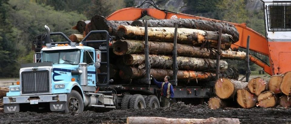 A worker checks a truck with a load of logs at Sqomish Forestry LP in Squamish,