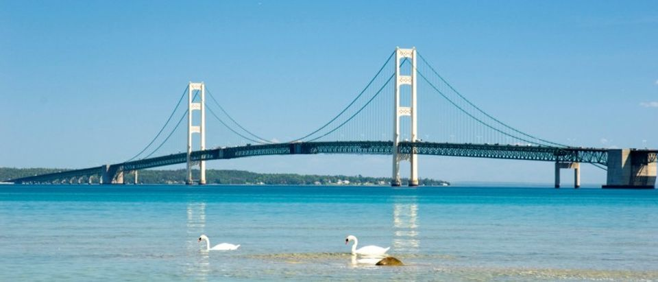 FILE PHOTO: Swans paddle near the Mackinac Bridge, spanning the Straits of Mackinac which connect two of the Great Lakes