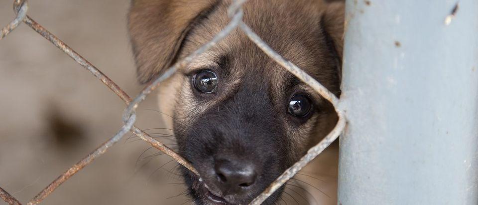 Dog behind chain link fence. Gullatawat Putchagarn/Shutterstock.