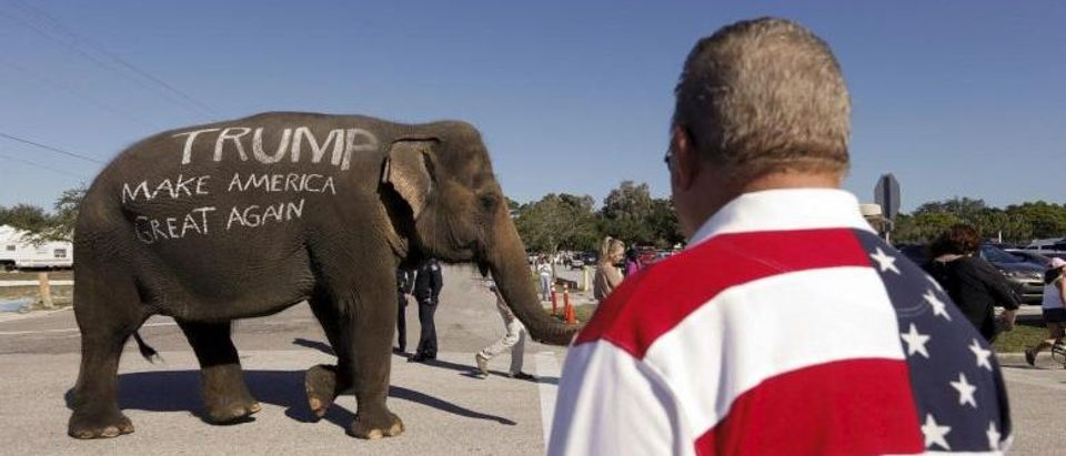 U.S. Republican presidential candidate Donald Trump supporters parade an elephant in front of a rally in Sarasota, Florida