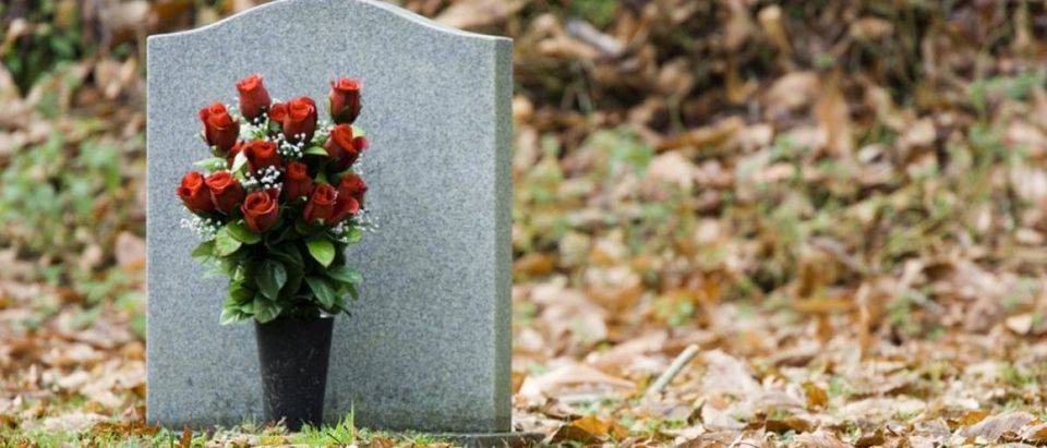 Red roses in front of a gravestone. [Shutterstock - Sam Chadwick]