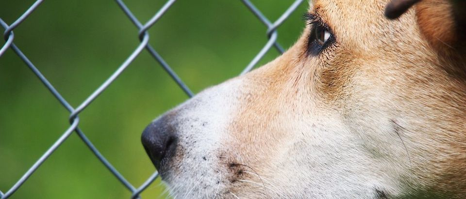 Dog pictured in front of a chain link fence. 1stGallery/Shutterstock.