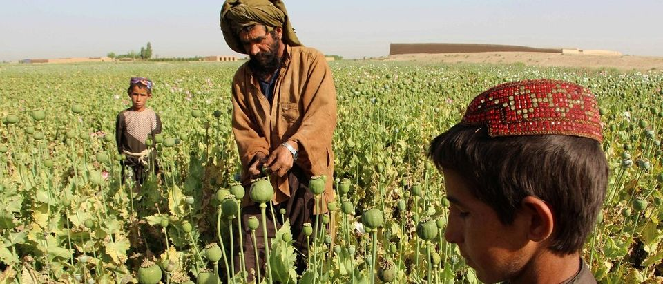 The US government has spent billions of dollars on a war to eliminate drugs from Afghanistan, but the country still remains the world's top opium producer. Noor Mohammad/AFP/Getty Images.