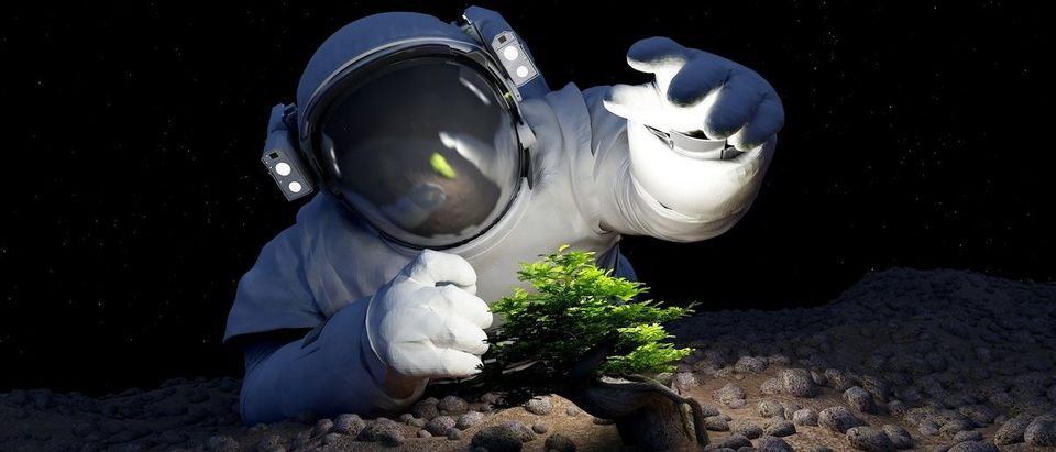 Astronaut and a tree in space. (Shutterstock/iurii)