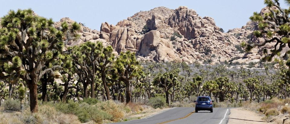 The beautiful Joshua Tree National Park is located in southeastern California (REUTERS/ Sam Mircovich)