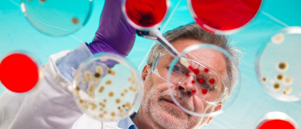 Focused senior life science professional pipetting solution into the pettri dish. Lens focus on the researcher. (Shutterstock/Matej Kastelic)