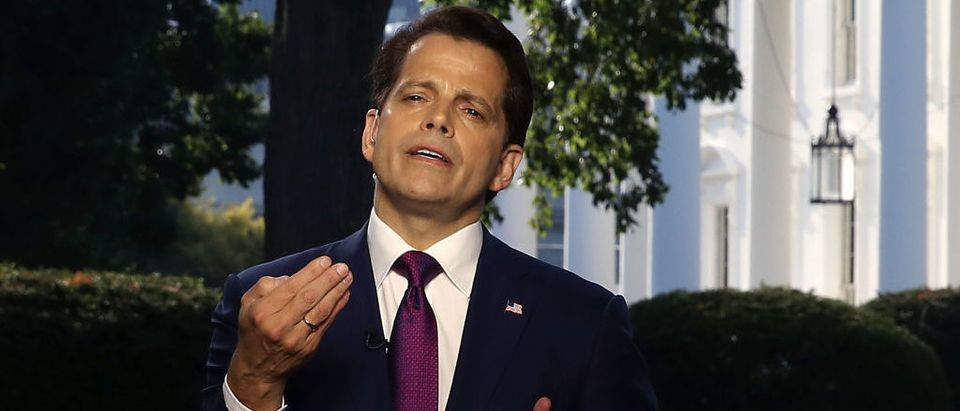 Former White House Communications Director Anthony Scaramucci (Photo by Mark Wilson/Getty Images)