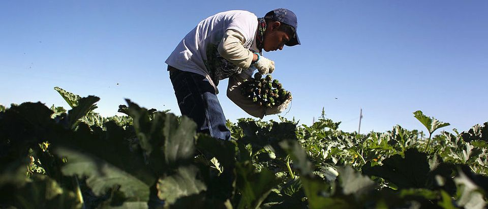 Migrant Workers Employed On Colorado's Largest Organic Farm