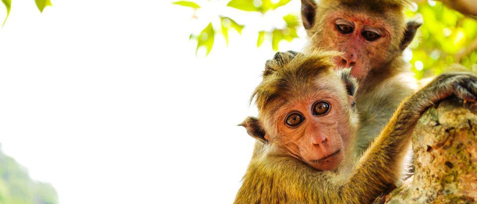 Shutterstock/ Monkeys on tree. Monkey portrait
