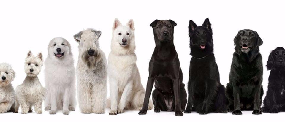 dogs Shutterstock/Eric Isselee