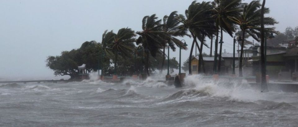 Palm tress buckle under winds and rain in Fajardo as Hurricane Irma slammed across islands in the northern Caribbean