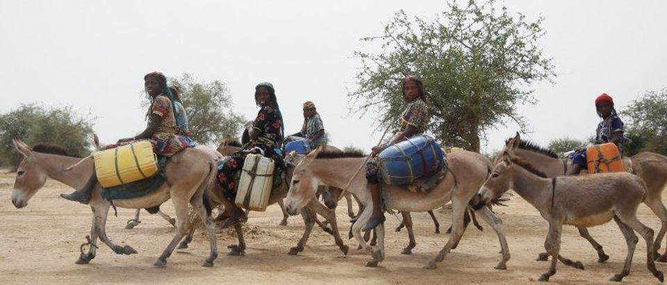 Women ride donkies after collecting water from the Hadejia river in Wachakal village in Yobe state.