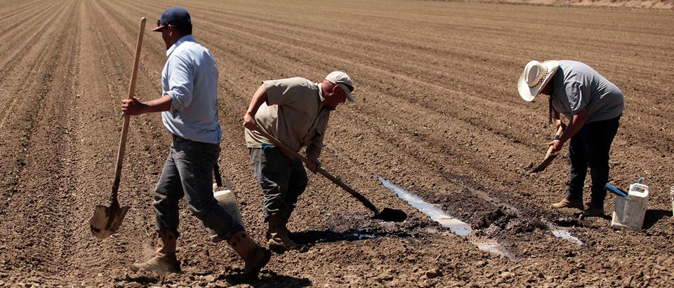 Farm workers repair irrigation pipes during spring planting in the Central Valley in Davis