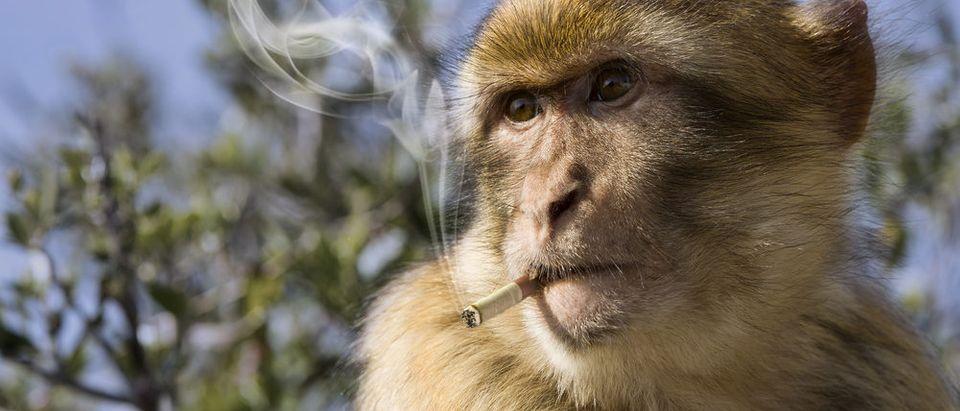 Monkeys are not people (Photo via Shutterstock)