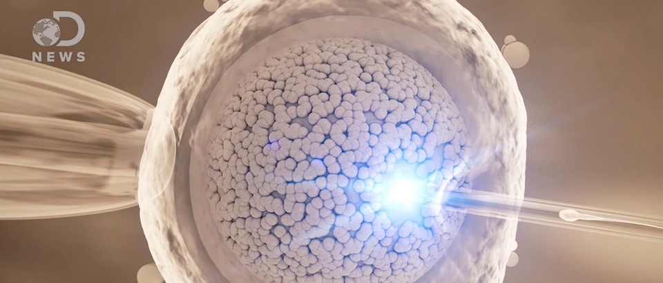 Sperm swimming to egg